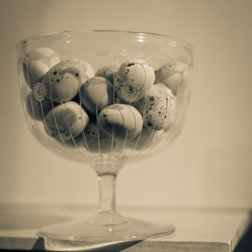 Still Life Photography by Eryl Shields