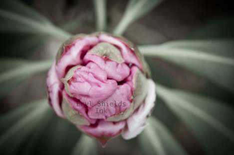 Flower Photography by Eryl Shields