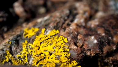 When Lichen Bathes the Rocks in Gold