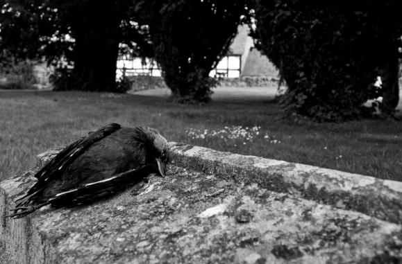 Black and white fine art photograph