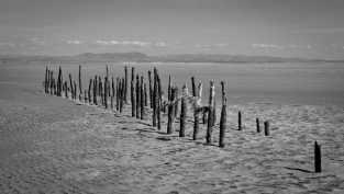 Rotting fence posts on a sandy beach at Mersehead Natrue Reserve.
