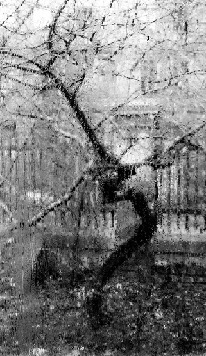The famous old, gnarled (apple?) tree in Josef Sudek's courtyard, seen from the window of his atelier. It's so animated and angular!