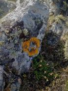 Lichen: what's not to love?